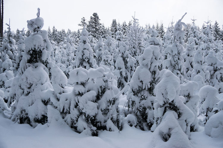 Cold Temperature Snow Winter Beauty In Nature Nature Covering Tree Plant No People Day Frozen Sky Tranquility Land White Color Tranquil Scene Scenics - Nature Field Outdoors Extreme Weather Black Forest