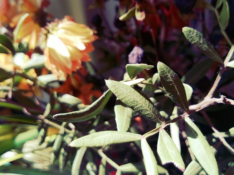 Broken Flowers shot with my beloved Nokia Lumia 920