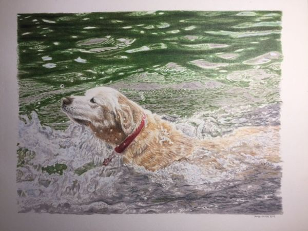 Pencil crayon drawing of a dog in water 20 x 25 cm Pencil Crayons Pet Portraits Canadian Art Colored Pencils Coloured Pencils Dog Dog Portrait Realistic Art Realistic Drawing