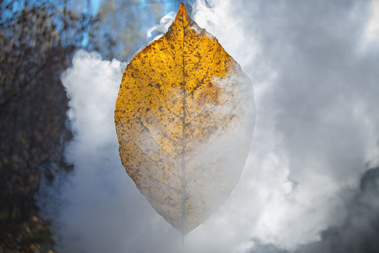 Close-up of yellow leaf against sky