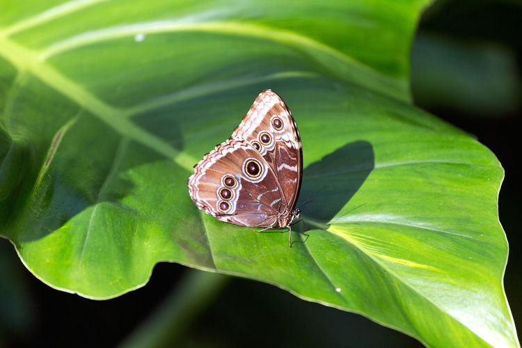 Butterfly Animal Themes Animal Wildlife Animals In The Wild Beauty In Nature Butterfly - Insect Close-up Green Color Insect Leaf Nature No People One Animal Outdoors Plant