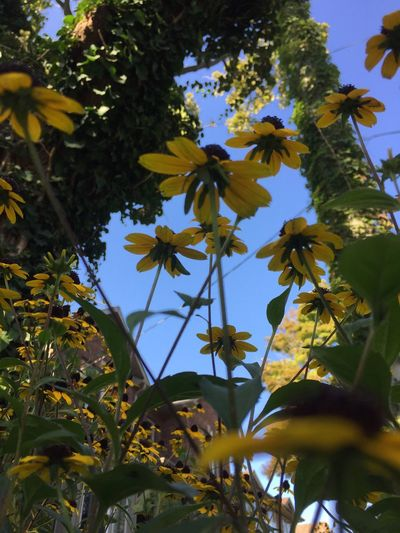 Flowers Yellow Nature Angle Beauty In Nature Camera Plus Afternoon Light