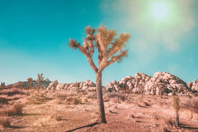 Tree in desert against sky