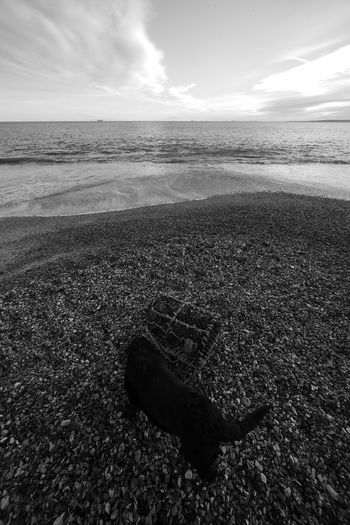 Intruder In The Frame Beach Beauty In Nature Black And White Blackandwhite Cloud - Sky Dog Horizon Horizon Over Water Land Nature Outdoors Scenics - Nature Sea Sky Tranquil Scene Tranquility Water