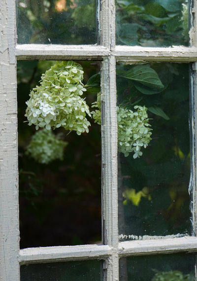Close-up of flowering plants seen through window