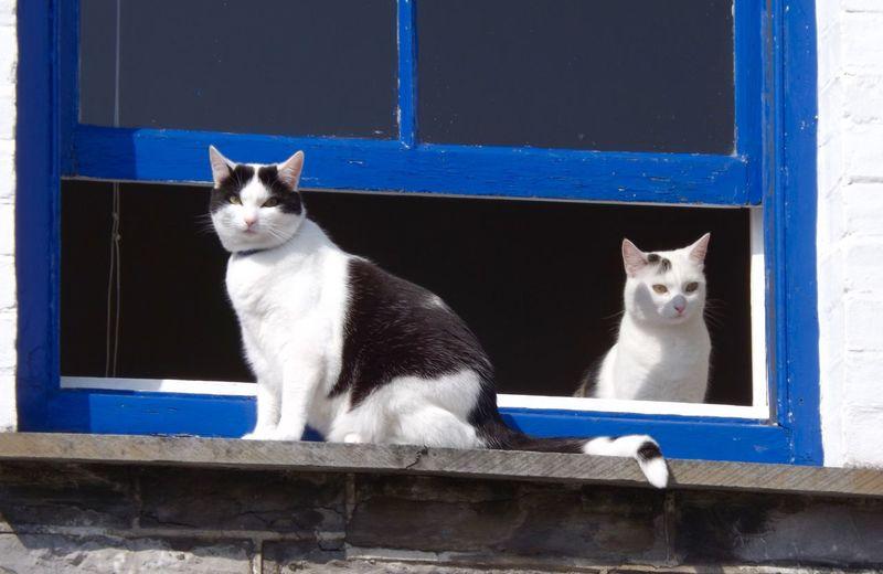 Portrait of cats
