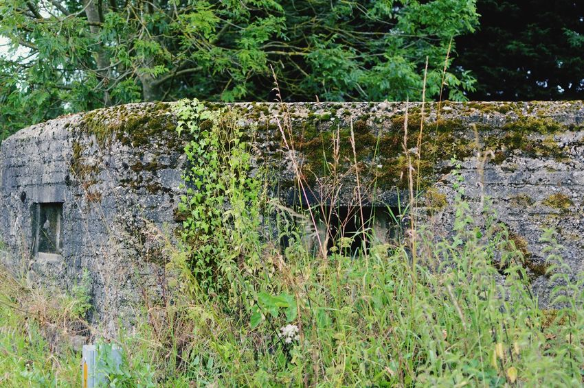 Day 119 - Overgrown pillbox Relaxing Taking Photos Hanging Out PILLBOX Overgrown Urban Decay Eye4photography  EyeEm Best Shots