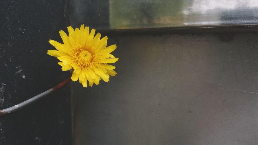 Flower Flower Head Yellow Close-up