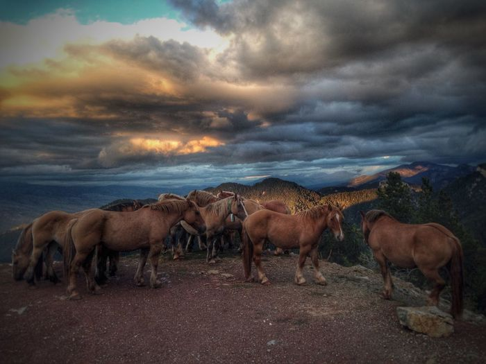 Wildlife Horses Clouds Mountains IPhoneography