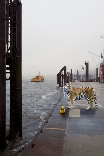 Wildes Leben Animal Foggy Hafen Hamburger Hafen Harbor Nebel No People Outdoors Tiger Transportation