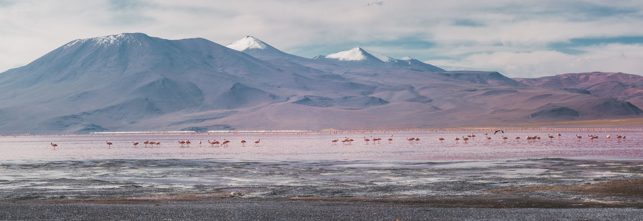 Scenic view of flamingos in lake in front of mountains against sky