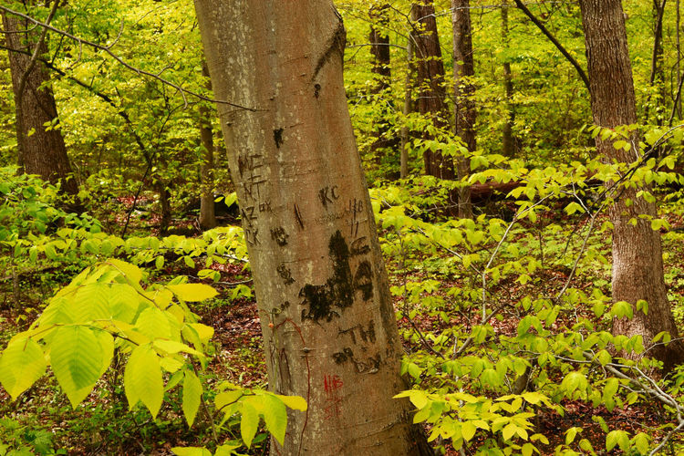 Newark by KJM Beauty In Nature Branch Close-up Colorful Day Forest Green Color Growth Leaf Nature No People Outdoors Plant Tree Tree Trunk