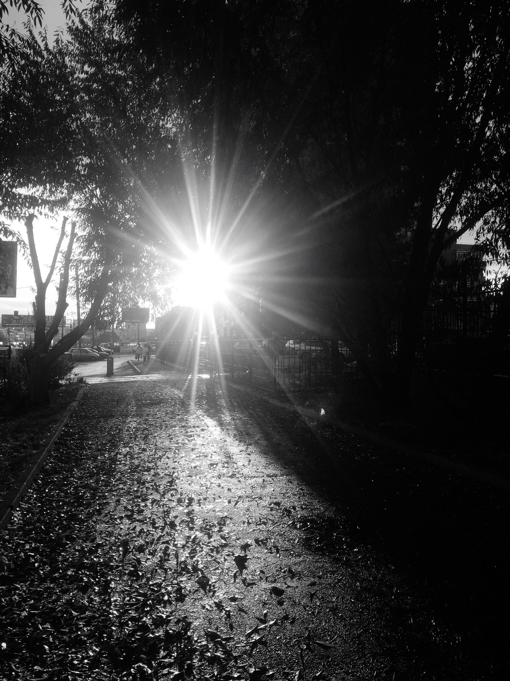 lens flare, sunbeam, tree, sunlight, sun, building exterior, footpath, tranquility, day, branch, tranquil scene, outdoors, lawn, nature, surface level, backlit, the way forward, remote, scenics, solitude, no people