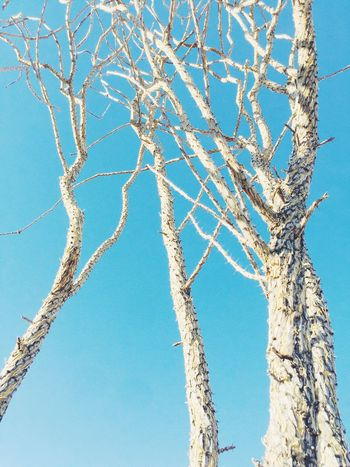 Ocotillo Ocotillo Low Angle View Day Blue Branch Nature Tree Beauty In Nature