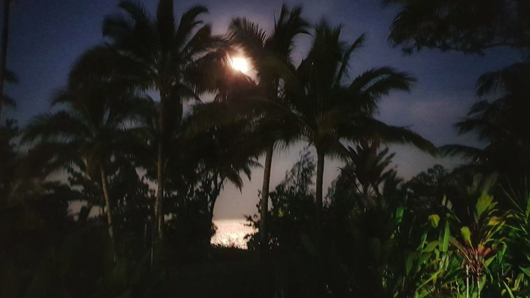 Full moon at Wongaling Beach Queensland Australia Nature Photography Nature Wild Palm Tree Trees Beauty In Nature Beachphotography Beachside Nightphotography Fullmoon At The Sky Full Moon Night View Night Shot Sea Seaside Seaside Town Beach Living Moon Reflected In Water