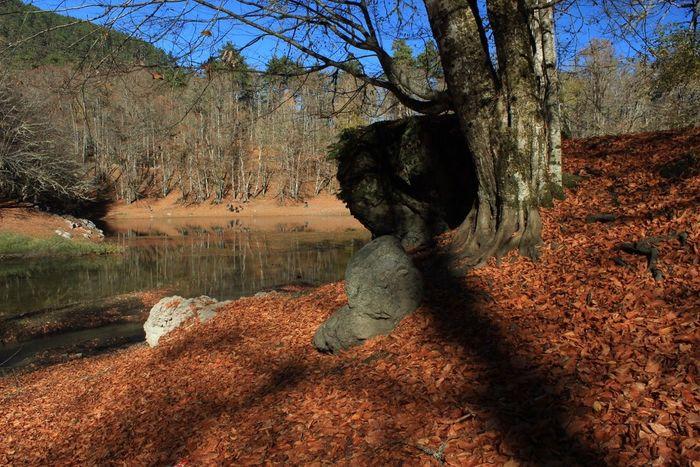 Autumn Tree Lake Leaf Yellow EyeEm Best Shots EyeEm Nature Lover EyeEmBestPics Yedigoller Bolu  Turkey