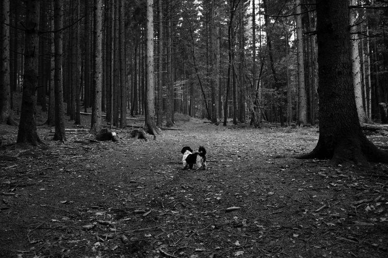 A Dog Check This Out Hello World Hi! Taking Photos Forest First Eyeem Photo