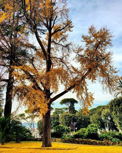 Rome autumn!December Trees Panoramic Autumnleaves Colours Yellow Sky Clouds Blusky Instamoment Instapic Instadaily Dailyphoto DailyShot Picoftheday Rome Lazio Italy Igersitaly Igersrome Nature Naturelovers