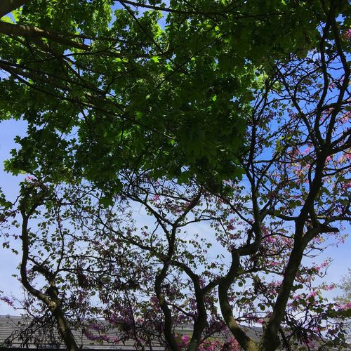IPhone Photography Taking Photos My Garden @my Home Judea Tree