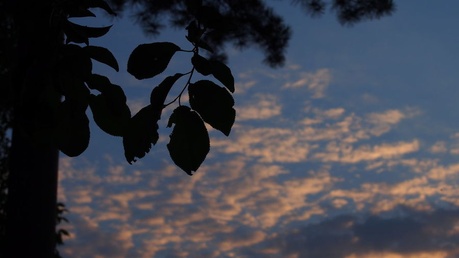 Leaf Leaves Tree Branch Branches Branches And Sky Sky Clouds And Sky Sunset Mirrorless Beautiful Sky Nature Naturephotography Silhouette Cloud Clouds Amateurphotography Plant Plants Blue Sky Blue White The Great Outdoors - 2016 EyeEm Awards