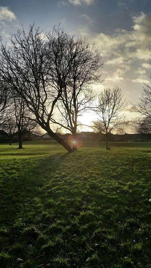 Gorton Park Sunset Trees