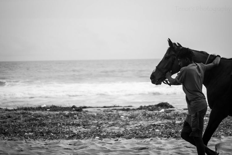 Sea Beach Outdoors Horse Horse Riding Horseandrider Animallover Velibeach Trivandrumdiaries India Trivandrum Beach