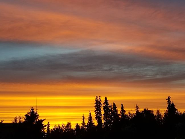 Summer Views Summertime Clouds And Sky Clouds Alaskan Nature Alaska Beauty In Nature Sunrise Sunrise And Clouds 3amphotography Tree Tree Area Sunset Multi Colored Forest Silhouette Sky Cloud - Sky Dramatic Sky Romantic Sky Spruce Tree