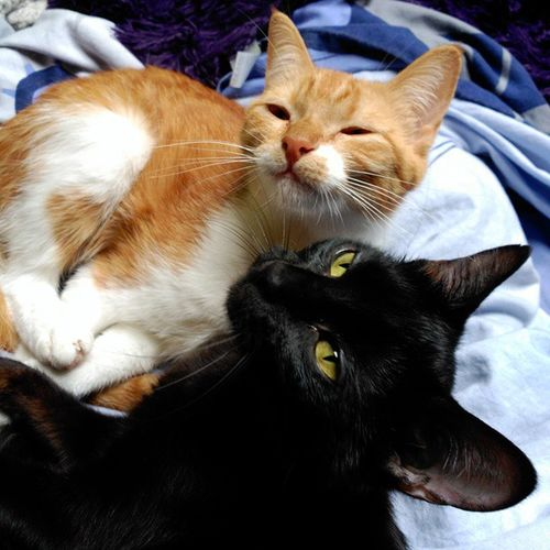 Amorgatuno Cats Cat Pet Pets Kitten Kittengram Instalike Intacats Gatitos Gatitosdeinstagram Gatos Gatomania Catlover Catslover Ilovemycat Miau Meow Purrfect Purr Cool Cute Cutecat CuteKitten