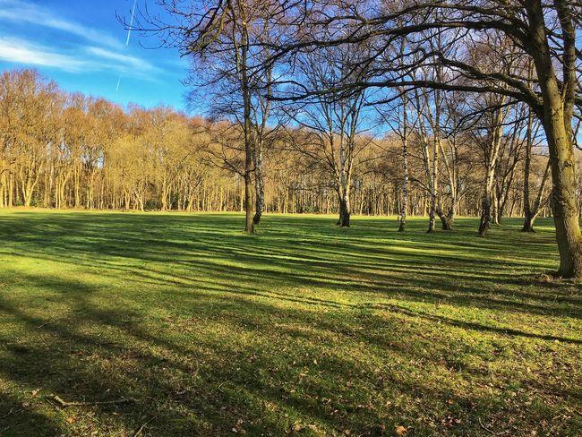Long shadows WoodLand Green Trees Shadows No People Landscape Imnewhere