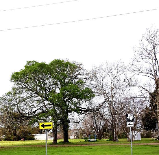 Texas Road Tree Scenery Shots