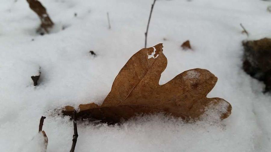 Fall Beauty Steinhude-am-meer.de - Dein Meer-Foto Taking Photos Little Things Nature Lover