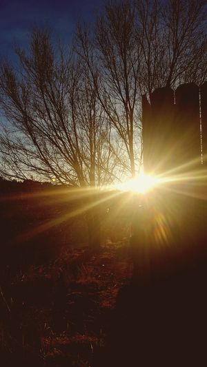 Sunlight Sun Nature Sunbeam Beauty No People Tree Coloradosunrise Sunrise Sunrise_Collection Sunflare Outdoors Silhouette Morning Light Morning Faded Outdoor Photography Exploremore EyeEmNewHere Optoutside Scenics Creative Photography Throughthelens Photooftheday Rise And Shine