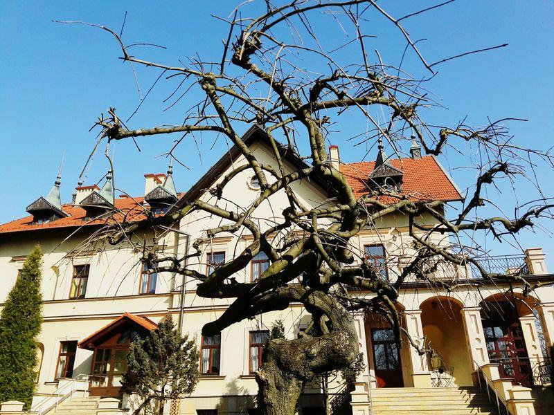 Szkoła Drzewo First Eyeem Photo