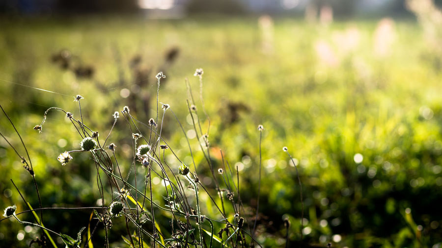EyeEm Best Shots EyeEm Nature Lover Field Grass Landscape_Collection Beauty In Nature Close-up Day Field Flower Focus On Foreground Freshness Grass Grassy Green Color Growth Landscape Landscapes Nature No People Outdoors Plant Tranquility Wild Flowers