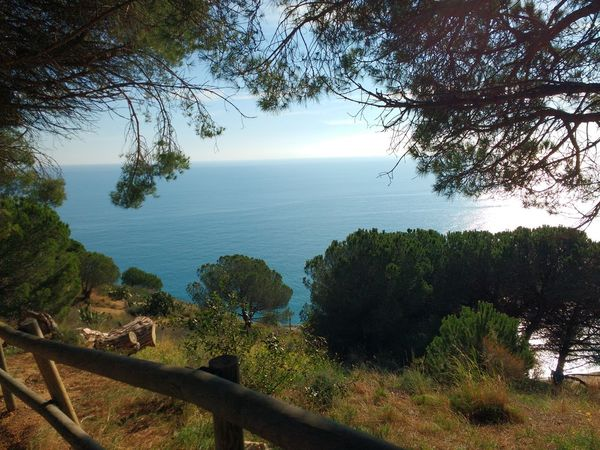 Sea Tree Nature Water Beauty In Nature Tranquility No People Sky Outdoors Horizon Over Water Beach Mountain Hill Path Maresme Pure Pines