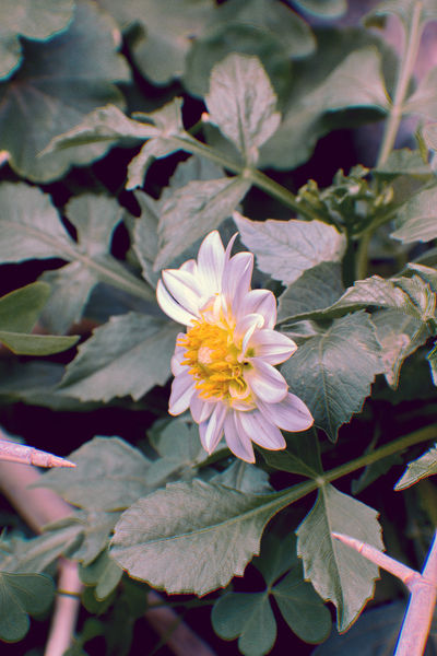 Beauty In Nature Blooming Close-up Day Flower Flower Head Fragility Freshness Growth Leaf Nature No People Outdoors Petal Plant