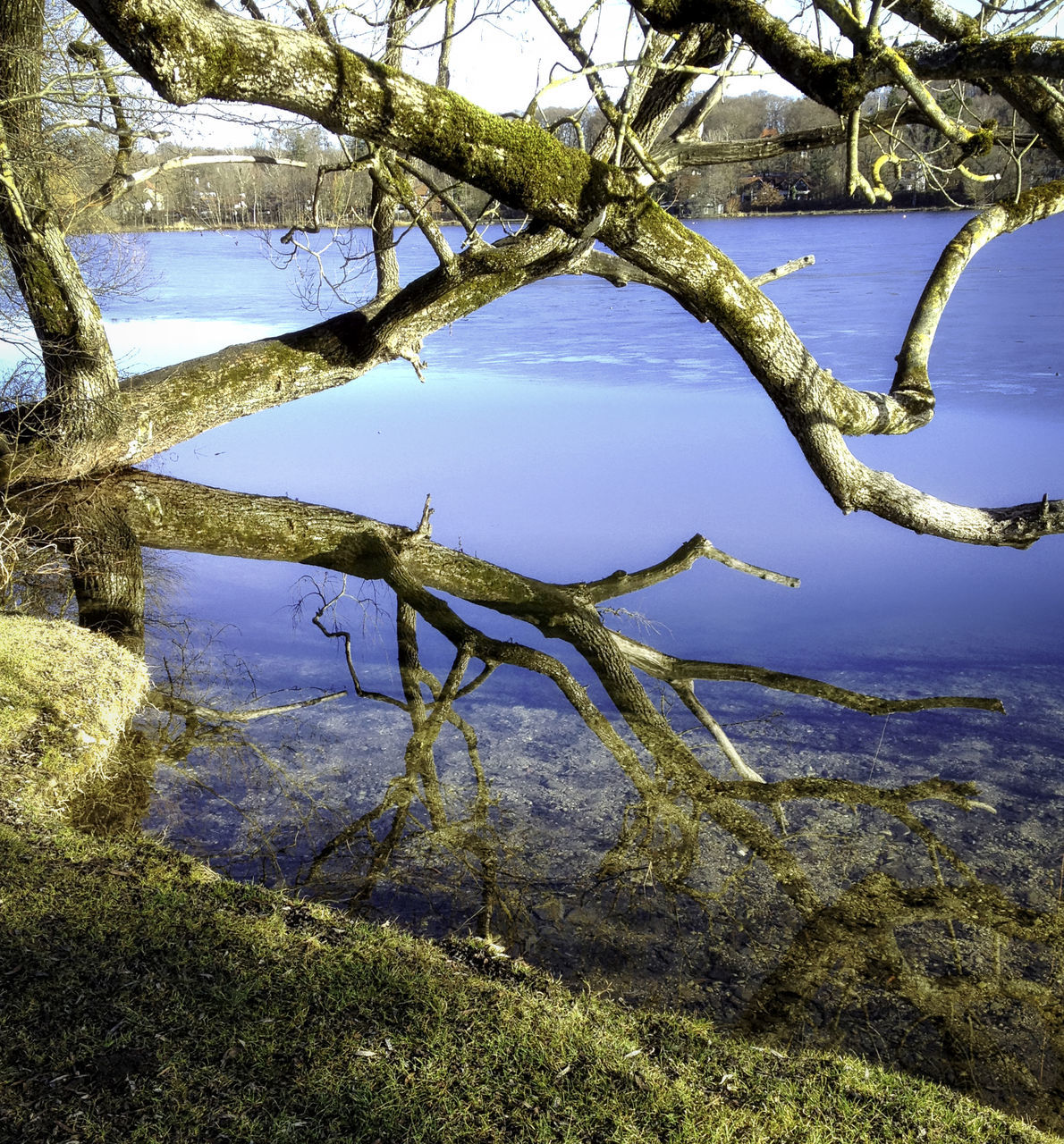 nature, tree, day, outdoors, beauty in nature, tranquil scene, no people, scenics, lake, branch, tranquility, water, sky
