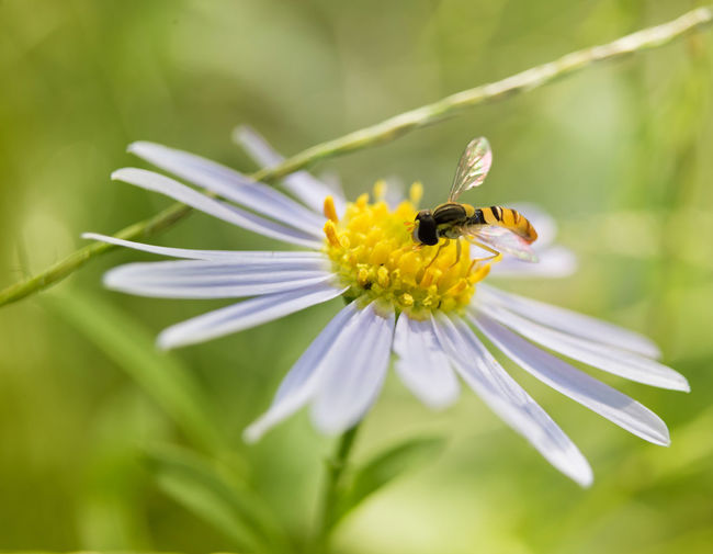 Close Up with Nature Bug Daisy Beauty In Nature Close-up Flora And Fauna Growth Macro No People Plant