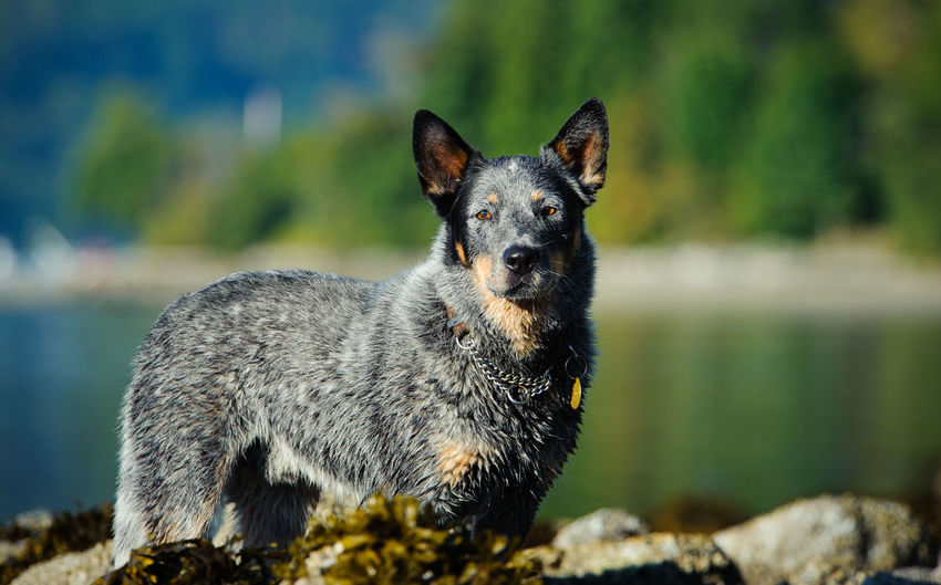 Close-up portrait of a dog in lake