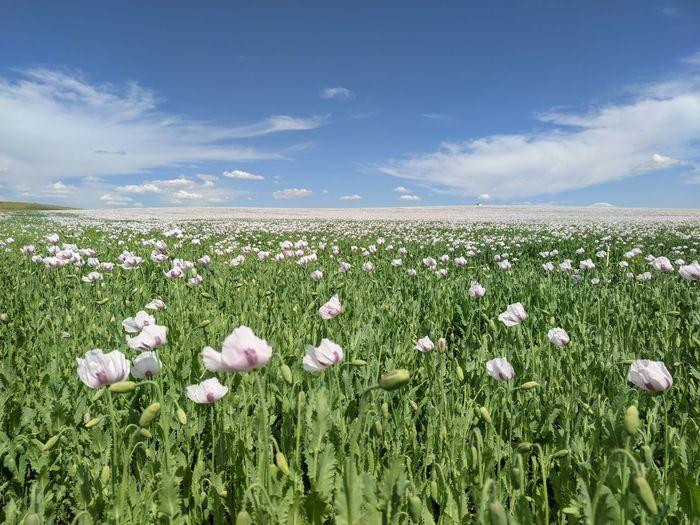 View of flowering plants growing on field against sky
