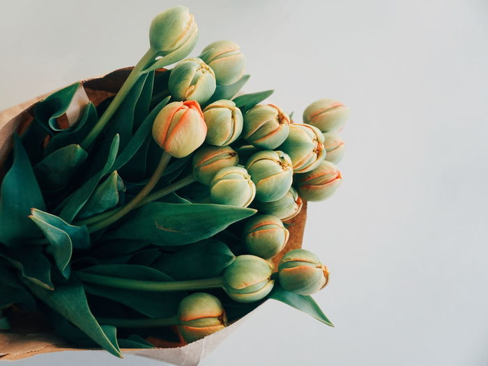round shaped tulips Tulips Tulip Flower Flower Head Springtime Spring Flowers Spring Bouquet Copy Space Artichoke Legume Family Dieting Biology Science Healthy Lifestyle Healthcare And Medicine Close-up Food And Drink Bunch Blooming Growing
