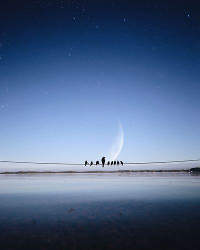 Flock of birds on beach against clear sky at night