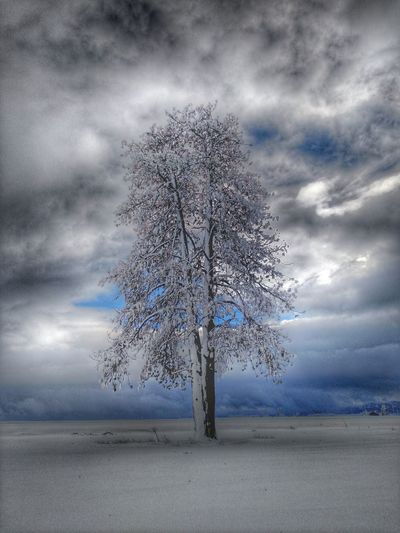 Talking to winter at the Lightning Tree in North Idaho. JustIdaho Solitude Lightningtree Winter Prairie