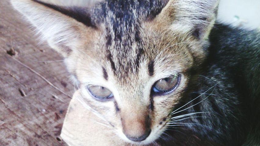 Cats Luvya