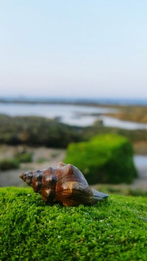 Conch Shell On Moss At Sea Against Sky