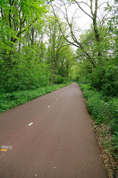 Beauty In Nature Bike Lane Bike Ride Bike Road Day Forest Grass Green Color Growth Landscape Nature No People Outdoors Plant Road Scenics Sky The Way Forward Tranquil Scene Tranquility Transportation Tree