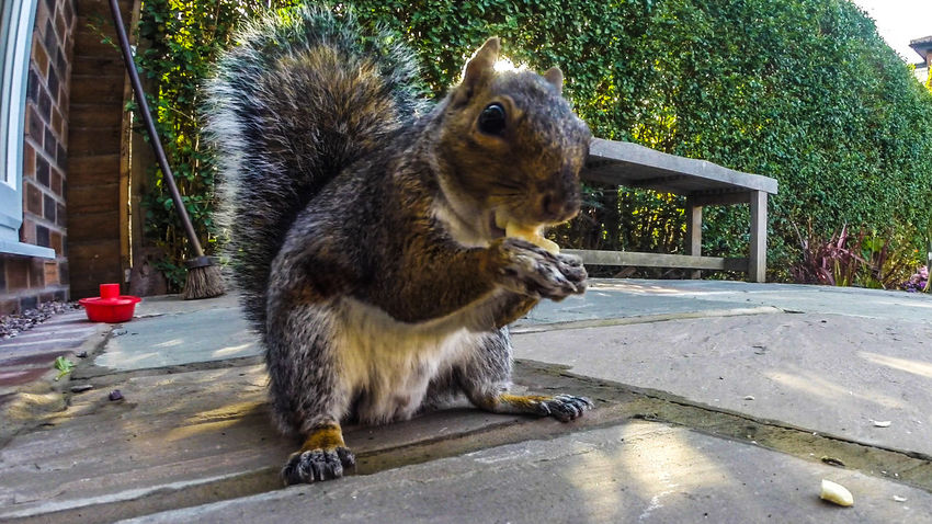 Nature On Your Doorstep EyeEm Nature Lover Squirrel Check This Out Food Tasty Snack Time!