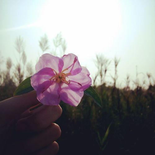 A flower is falling in sunshine !