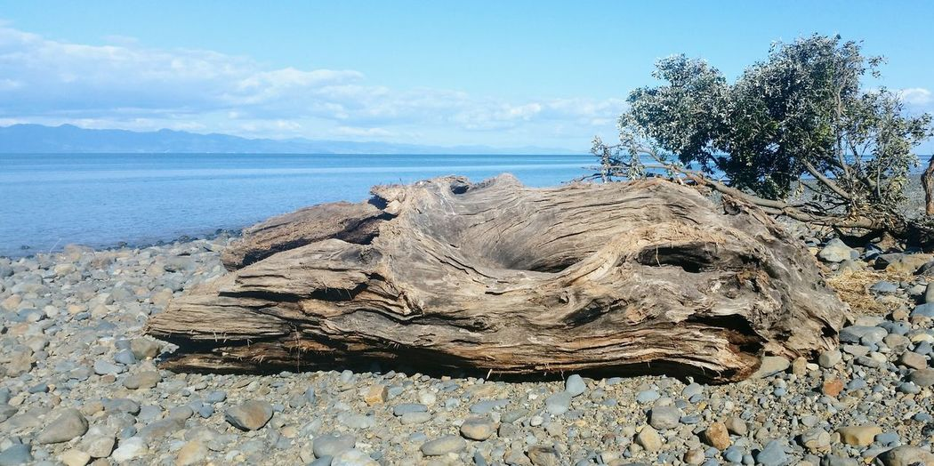 A washed up log