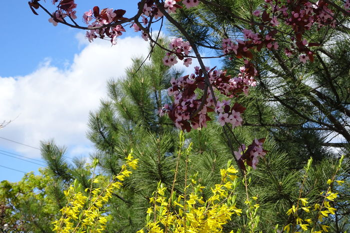 Tree Low Angle View Nature Growth Sky Beauty In Nature Branch Outdoors Day No People Forest Freshness Park Blossom Flowers Flower Layers